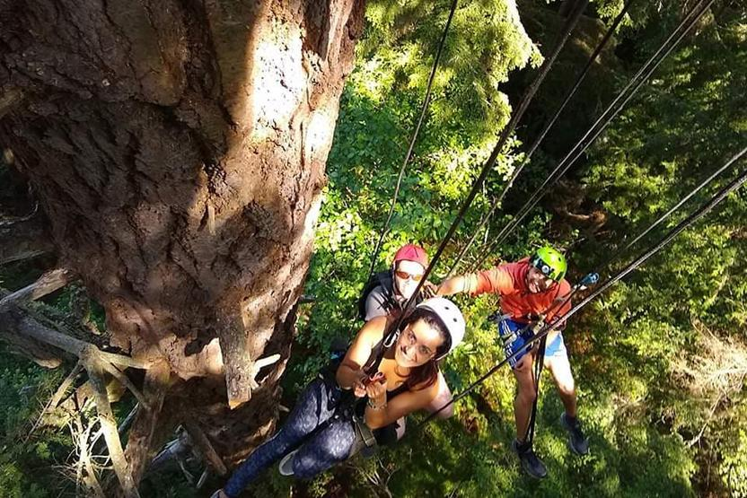 AdventureTerra Tree Climbing