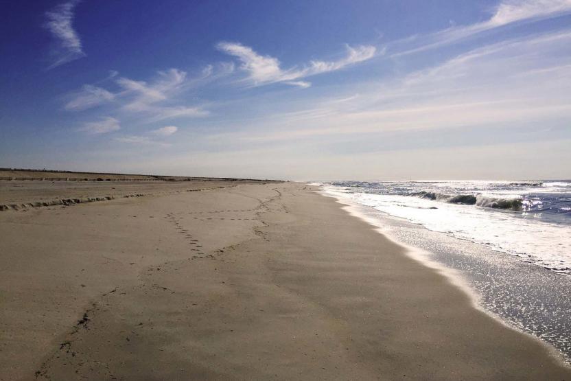 Go Wild NYC Gilgo Beach