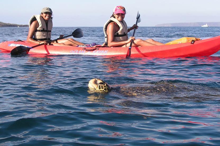 Maui Kayak Adventure Turtle