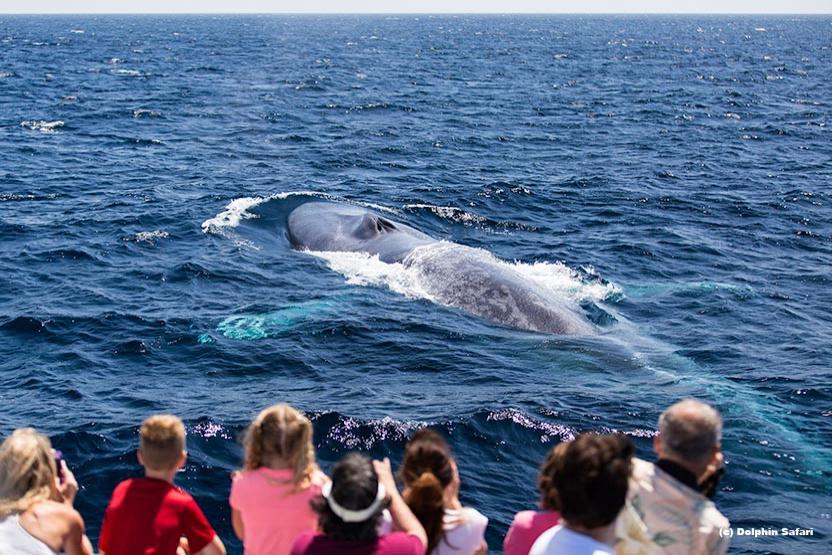 Captain Daves Dolphin And Whale Safari