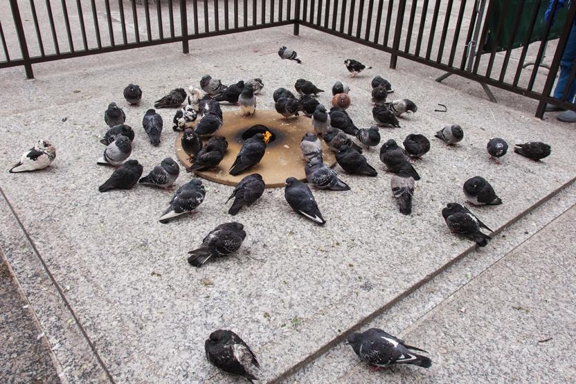 Chicago Daley Plaza