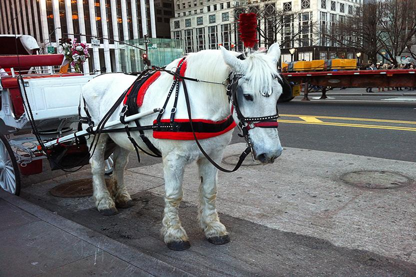 Horse Carriage Times Square