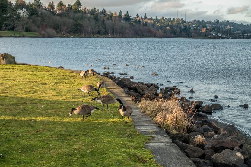 Lake Washington Seattle