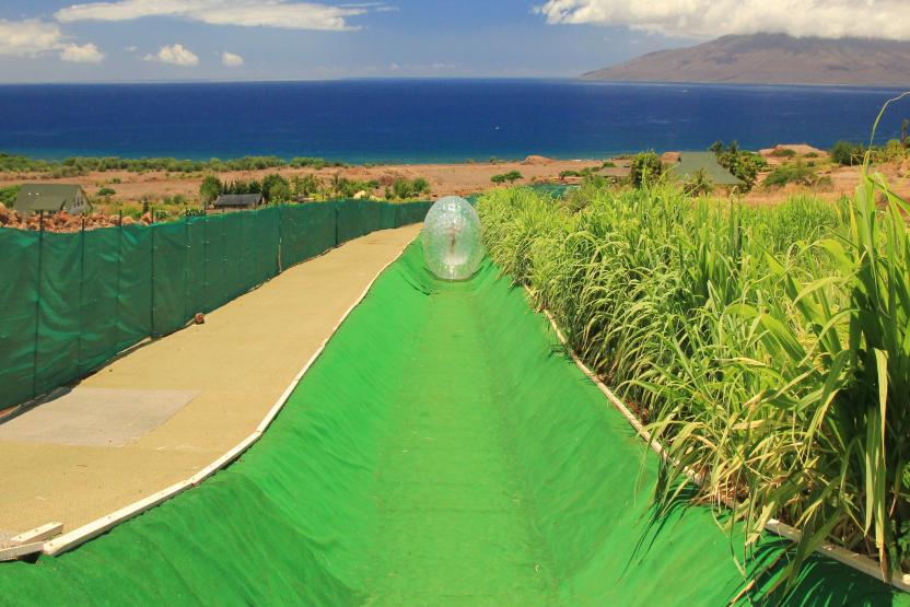 Maui Dragon Fruit Aquaball And Zipline Combo Adventure Tour