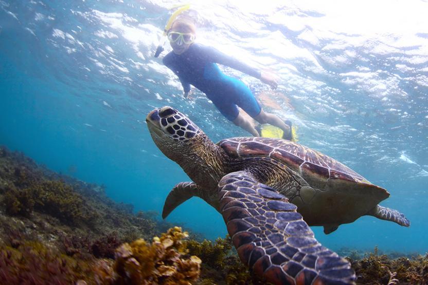 Maui Snorkeling