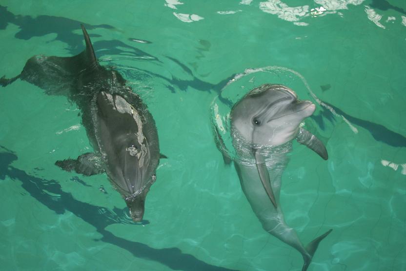 Sea World Generic