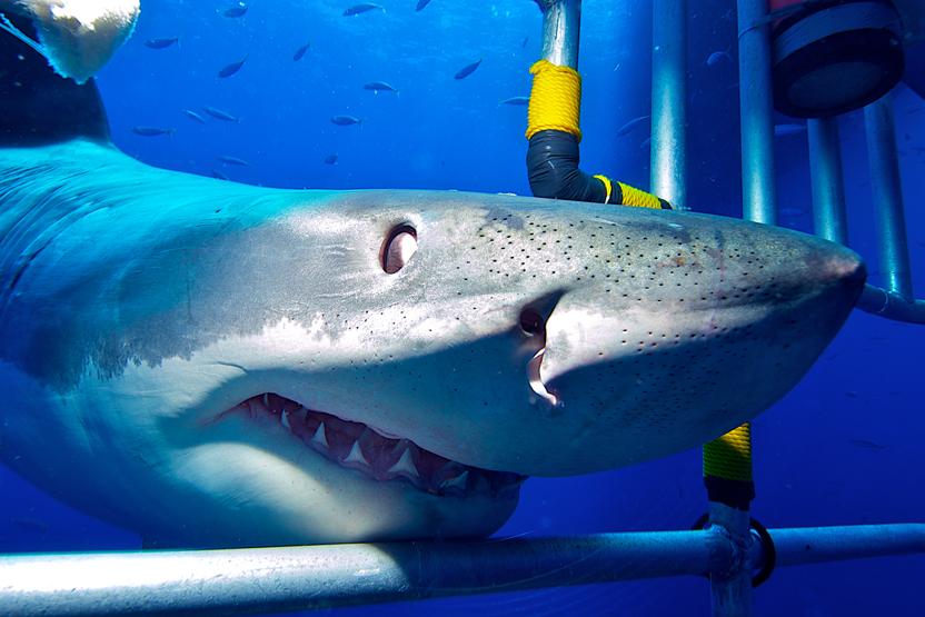 Shark Cage Dive Sea Turtle Dive Charters Diving Scuba