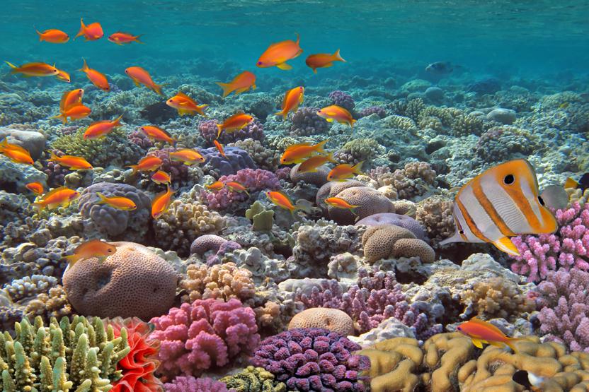 Underwater Tour