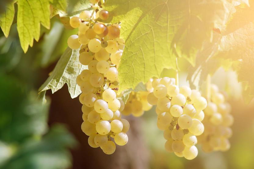Winery Generic