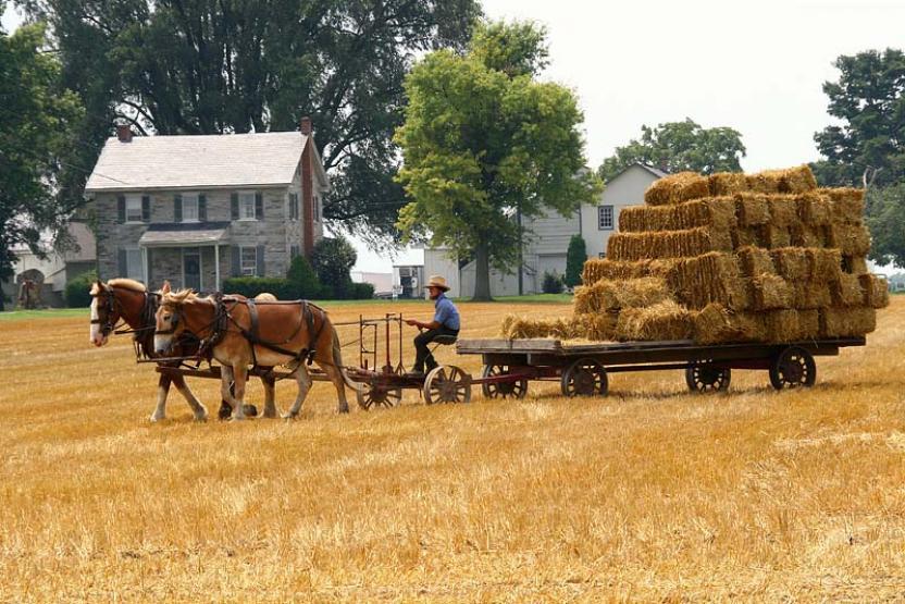 philadelphia-field-farmer-vimbly