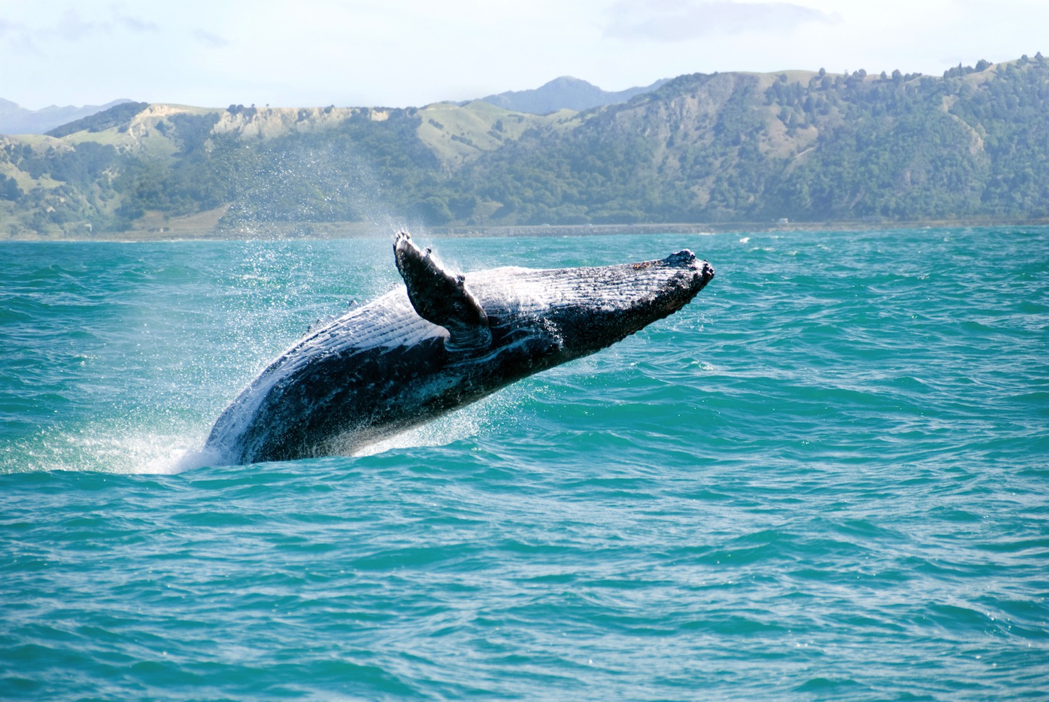 honolulu-date-whale-watch