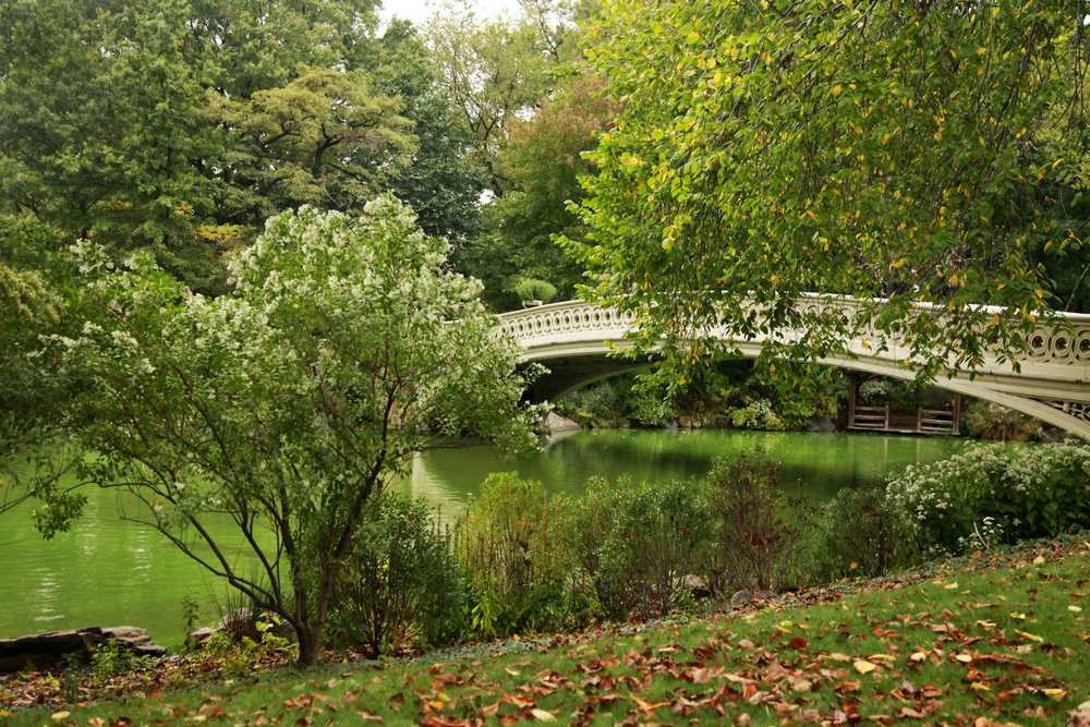 nyc-outdoor-adventure-central-park-vimbly