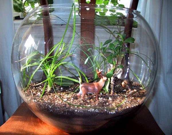 Terrarium Workshops and Green Living Guide in NYC