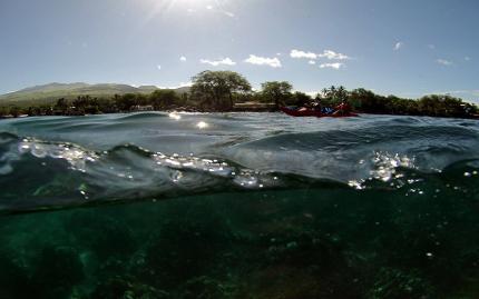 Maui Kayak Adventure Whale