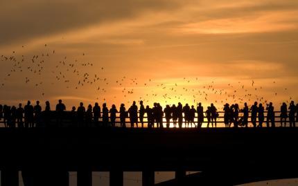 Austin Bridge Bats
