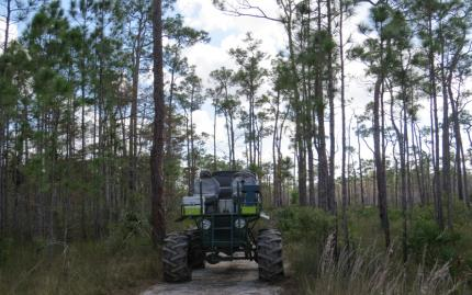 Everglades Nature Tours Swamp Mud