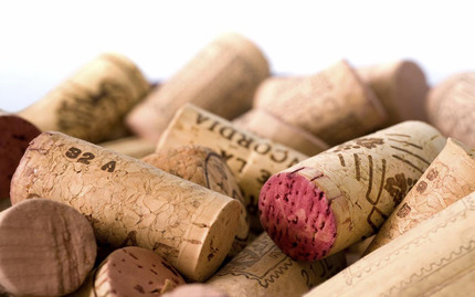 Wine 101: Discovering Your Palate